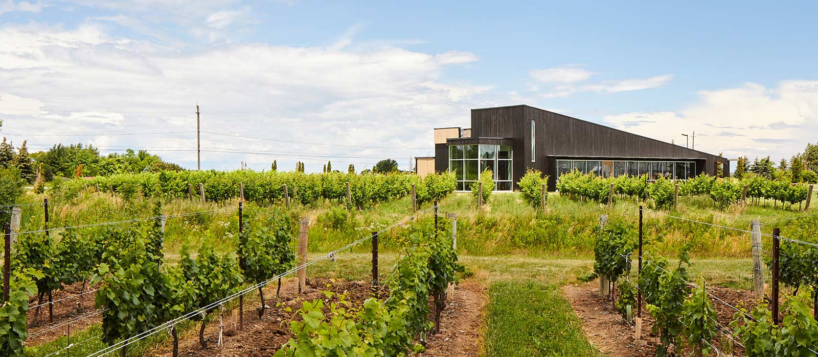 About Lakeview Wine Co. Niagara Winery